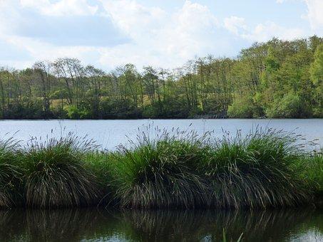 Pond, The Bars, Saint-sauveur-en-puisaye, Yonne