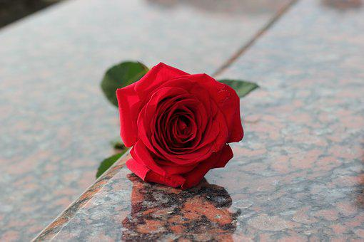 Red Rose, Red Marble, Gravestone, Love, Missing