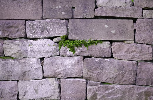 Wall, Live, Save, Nature, Survive