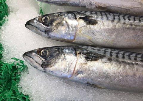Trout, Seattle, Fish Market
