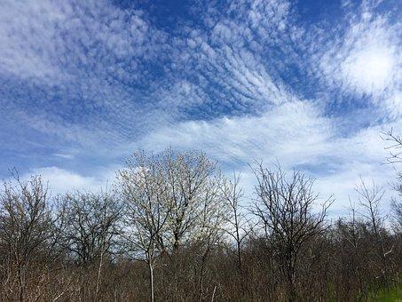 Clouds, Sky, Cirrus, Stratus, Blue, White, Trees, Bare