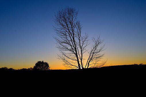 Sunset, Tree, Silhouette, Sky, Nature, Sun, Dusk