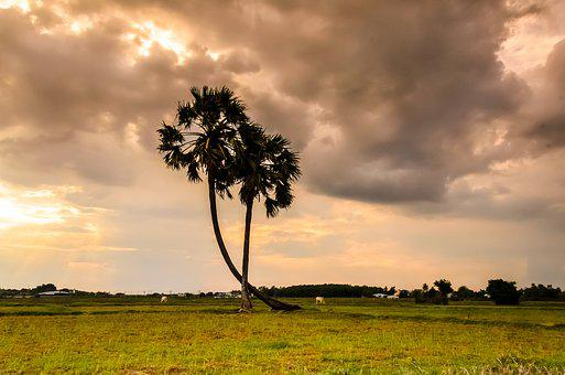 Tree, Thot, Palm Trees, Natural, Scenery, Neck, Sky