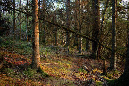 Woodland, Forest, Forestry, Trees