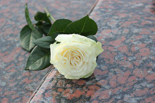 White Rose, Purity Symbol, Red Marble, Love, Missing