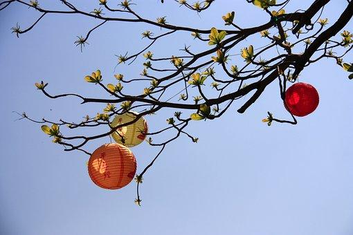 Lobular Terminalia, Chun Jie, Christmas, 燈 Long, Trees