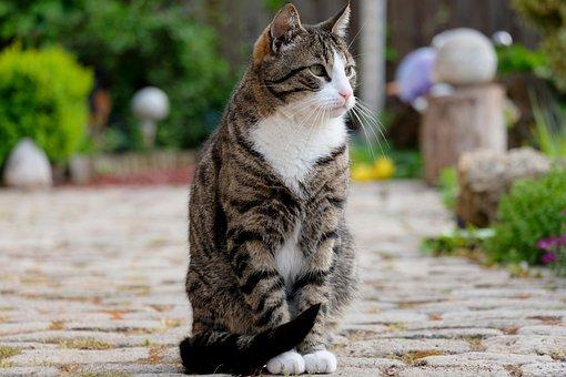 Cat, Sit, Pet, Animal, View, Pose, Nature, Domestic Cat