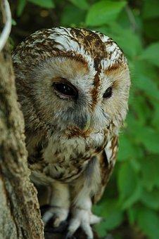 Owl, Zhivotnyie, Birds Nature