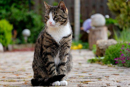 Cat, Sit, Pet, Animal, View, Nature, Domestic Cat