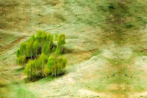 Landscape, Meadow, Field, Trees, Copse, Remote, Nature
