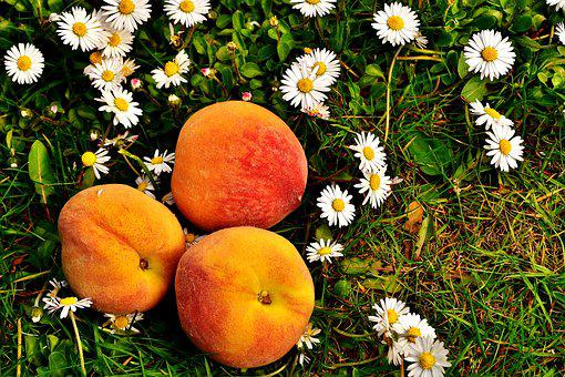 Peaches, Fruit, Sweet, Eat, Fruits, Delicious, Food