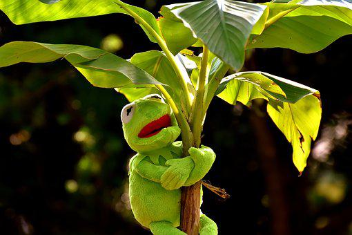 Exasperate, Kermit, Frog, Green, Toys, Soft Toy