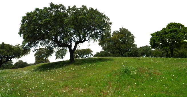 Meadow, Trees, Isolated, Flowers, Silhouette, Template