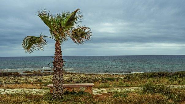 Palm Tree, Coastal Path, Sea, Horizon, Stone Bench