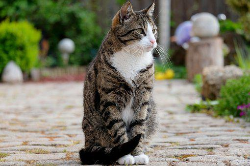 Cat, Sit, Pet, Animal, View, Pose, Nature, Domestic Cat