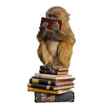 Education, School, Read, Learn, Library, Study, Monkey