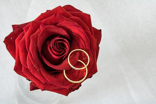 Wedding Rings, Rose, Rings, Gold Rings, Rose Is Lying