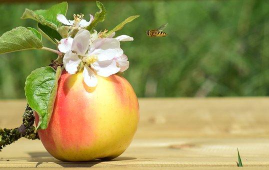 Apple, Apple Blossom, Spring, Blossom, Bloom
