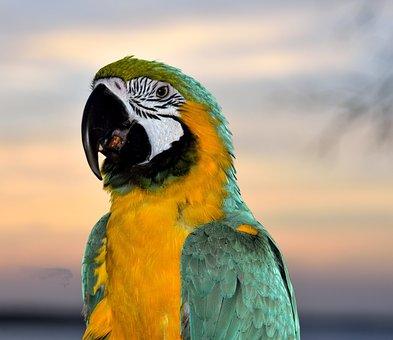 Macaw, Parrot, Bird, Avian, Pet, Feathers, Beak