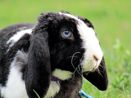 Rabbit, Bunny, Cute, Ušák, White, Stunted, Aries