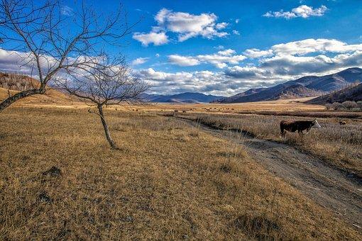 Late Autumn, Meadow, Cow, Grazing, Lane, Bogart Village