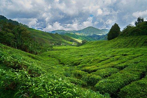 Mountain, Nature, Taylor, Tree, Grass, Cloud, Spring