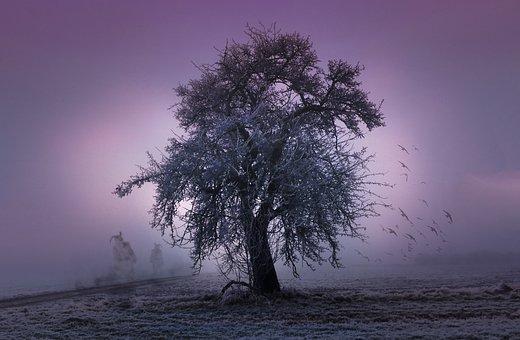 Tree, Halloween, Twelfth Night, Spirit, Creepy