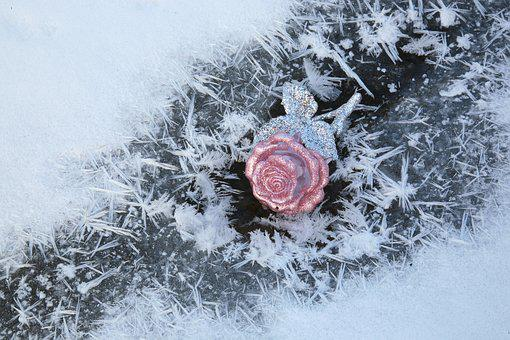 Leann, Winter, Cold, Frost, Ice, White, Crystal, Rose