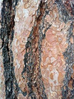 Bark, Texture, Rough, Nature, Tree, Wood, Trunk