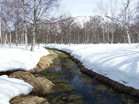 Spring, The Melting Of The Snow, Puddles, Heat, Forest