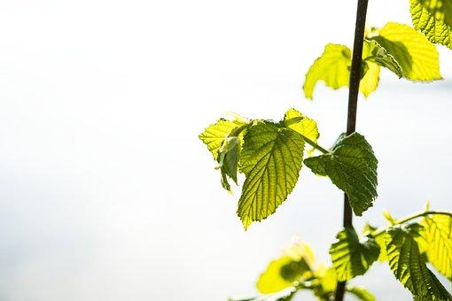 Banner, Leaves, Header, Close, Nature, Leaf, Background