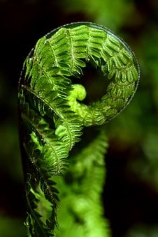 Fern, Green, Close, Plant, Forest, Nature, Leaves