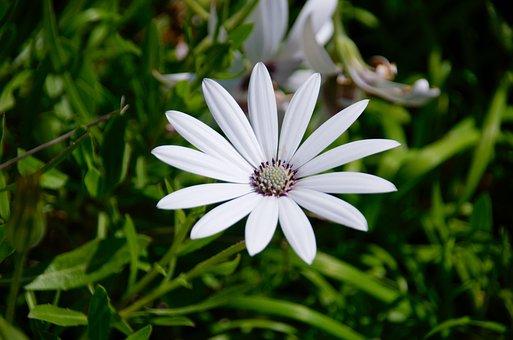 Basket Of Cape Town, Flower, Flora, Nature, Botany