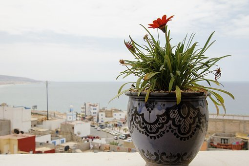 Flowerpot, Potted Plant, Flower, Clay Pot, Outlook