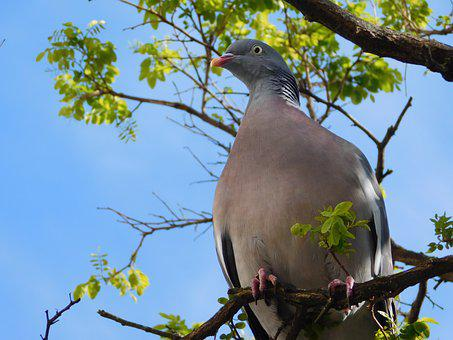 Dove, On The Branch, Branch, Bird, Sit, Animal, Leaves