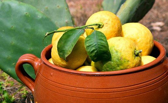 Lemons, Cactus, Clay Pot, Lemon Harvest, Mediterranean