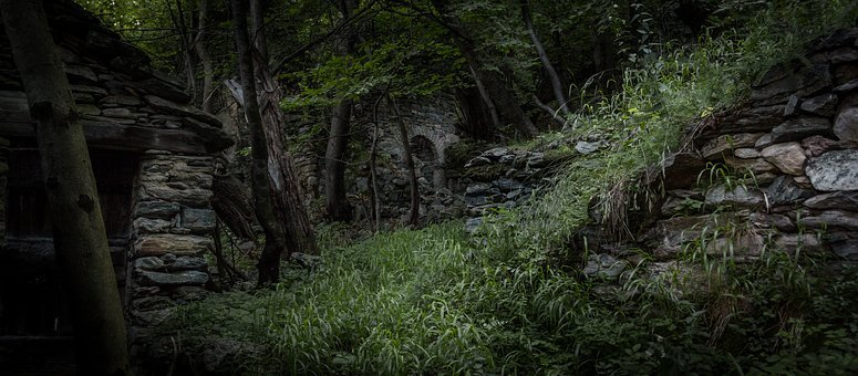 Jungle, Ruin, Ruins, Forest, Nature, Green, Grass