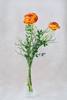 Ranunkeln, Orange, Red Yellow, Orange Ranunculus