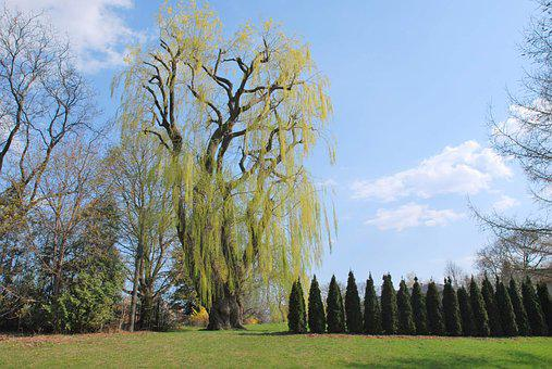 Garden, Park, Nature, Green, Tree, Outdoor, Summer