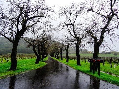 Rainy Weather, Horrible, Rain, Wet, Precipitate, Nature