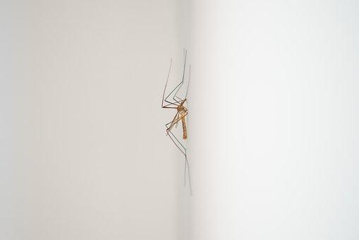 Mosquito, Midge, Animal, Sting, White, Bug, Insect