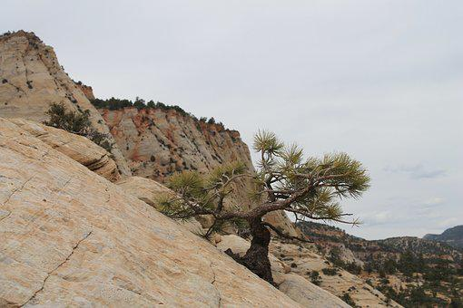 Tree, Banzai, Utah, Asia, Nature, Plant, Zion, Usa