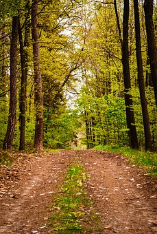 Hike, May Hike, 1, May, Landscape, Stroller, Away