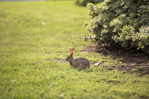 Animal, Bunny, Rabbit, Hare, Easter, Cute, Spring