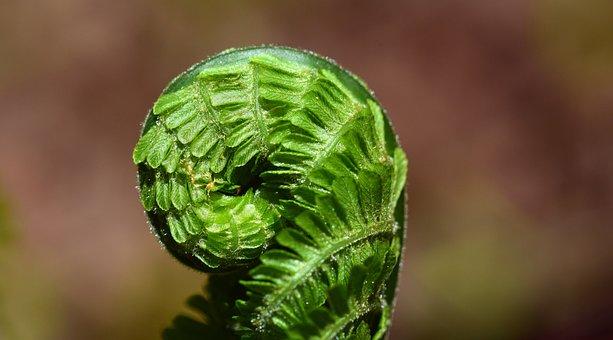 Fern, Green, Plant, Nature, Forest, Leaf Fern, Close