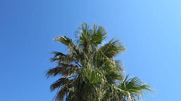 Palm, Sky, Summer, Partly Cloudy, Sun, Frond, Green
