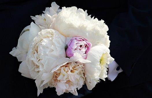 Bridal Bouquet, Peony, Bouquet, Congratulations