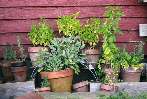 Herb Garden, Pots, Garden, Gardening, Plant, Green