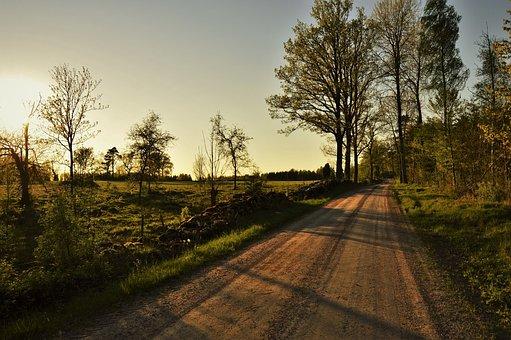 Forest, Road, Go, Bed, Solar, Sunset, Sweden, Tree