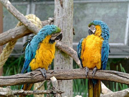 Conversation, Birds, Chat, Social